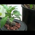 Hydroponics for Beginners,Uncomplicated Do it yourself Method