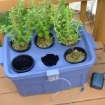 Diy Hydroponics Growing Procedure Home made For Novices